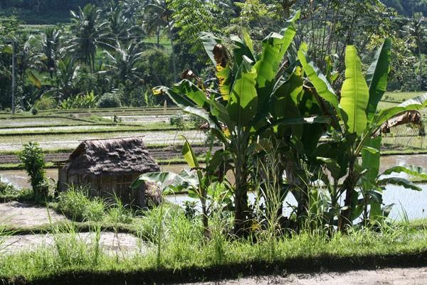 Arbeit in den Reisfeldern