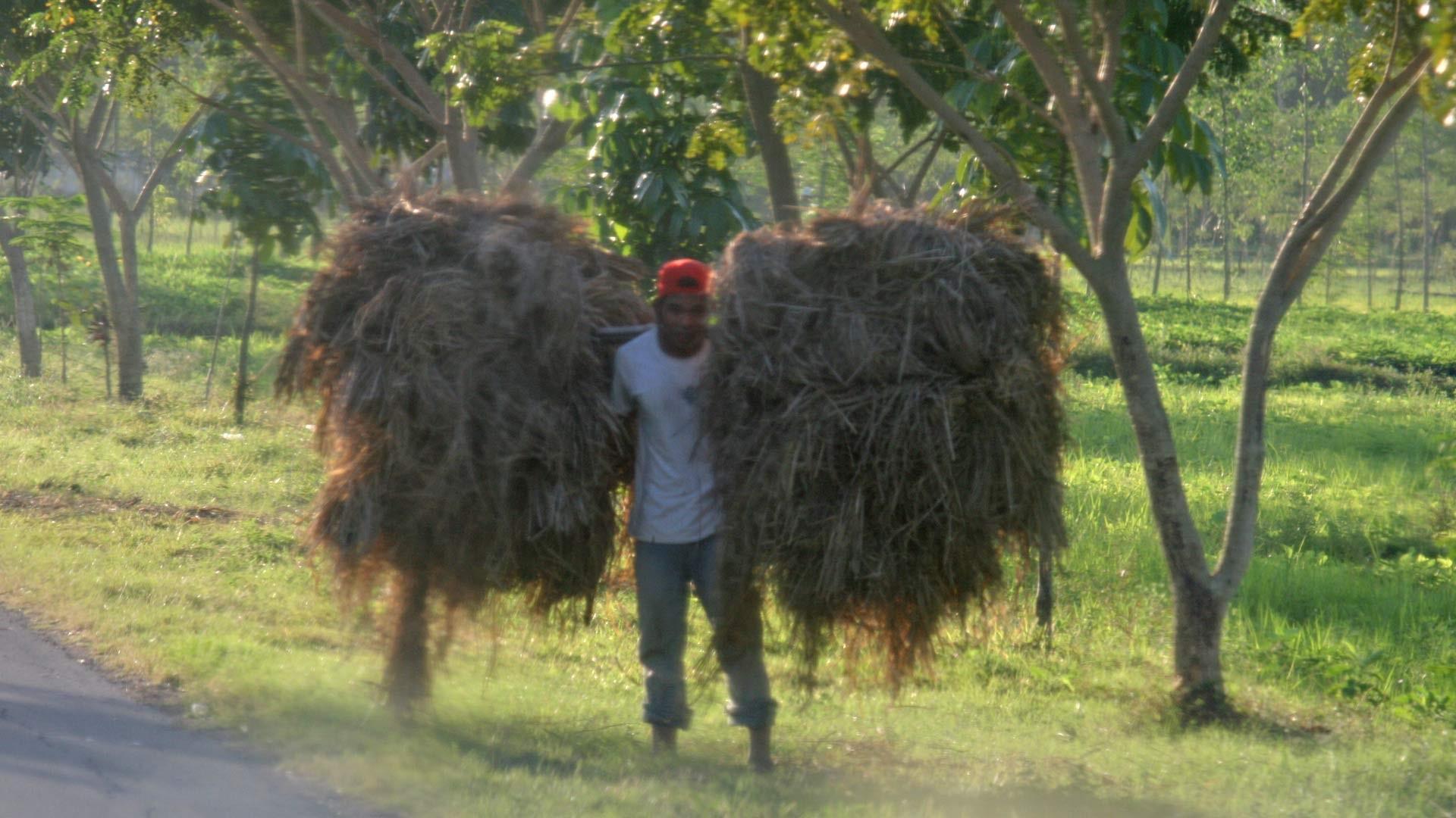Bauer auf Lombok