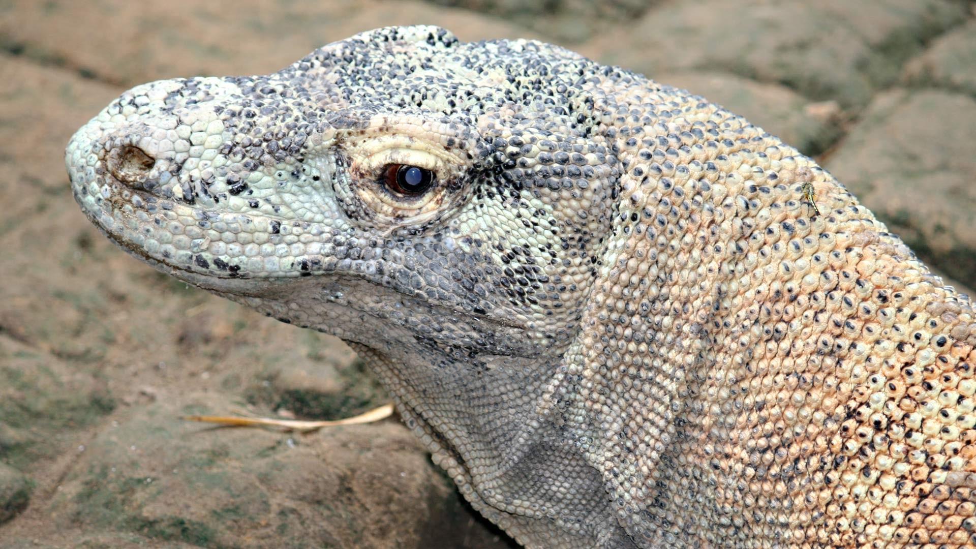 Reptilienpark RIMBA