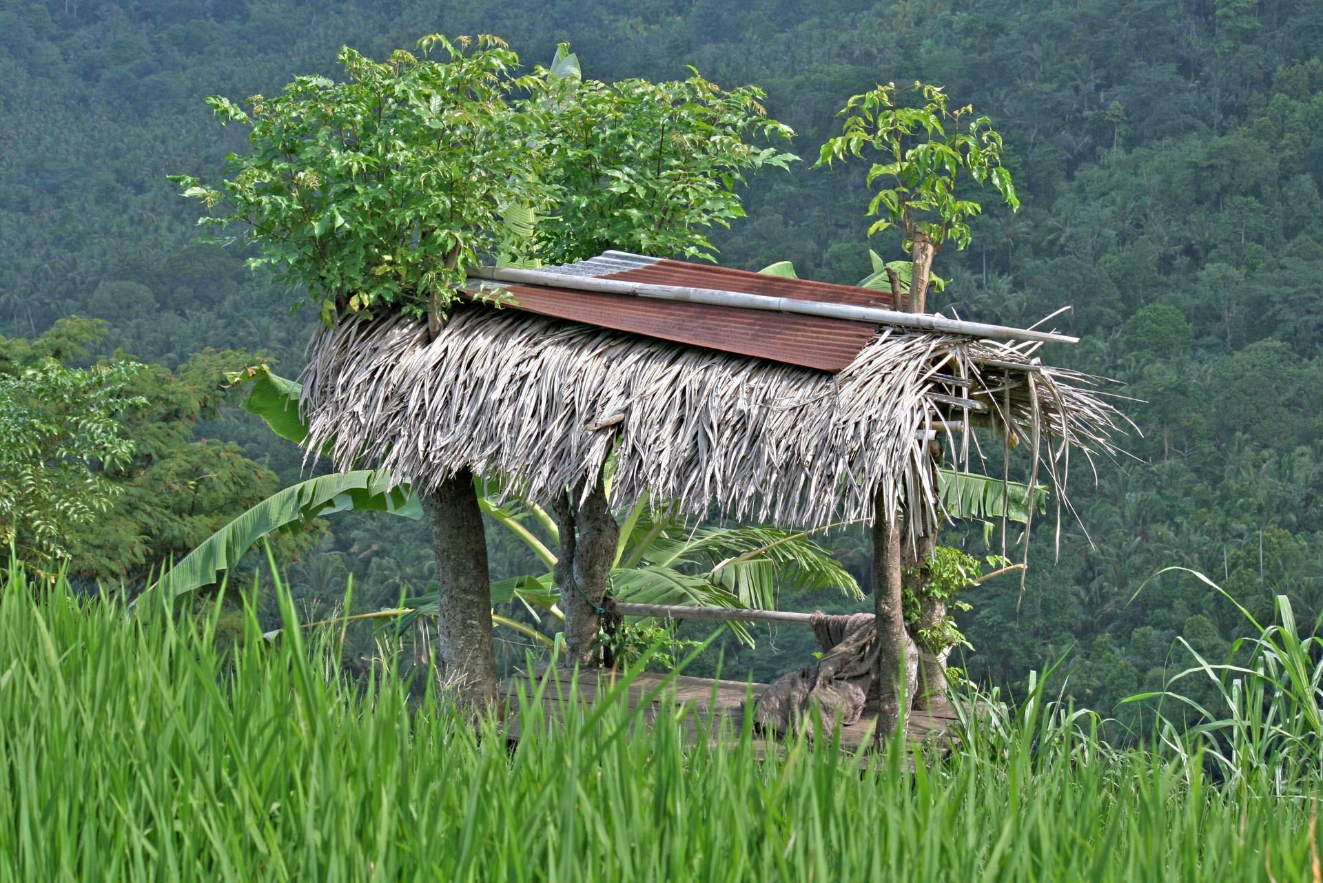 Sonnenschutz auf dem Reisfeld für die Bauern
