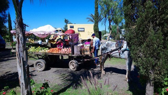 Gemüseverkauf am Campingplatz